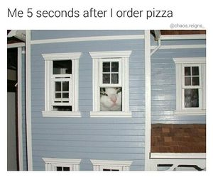 funny, cats, and food image