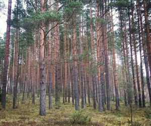 nature ; forest image
