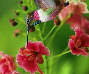 photography inspiration, amazing photography, and kingfisher photography image