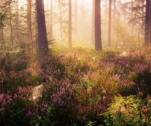 nature and forest image