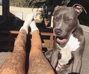 dog, tattoo, and legs image