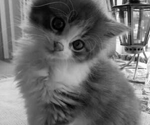 animals, kitten, and kawaii image