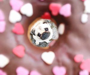 chocolate, dog, and delicious image
