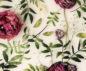 wallpaper, flowers, and nature image