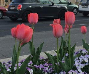 black, cooper, and flower image
