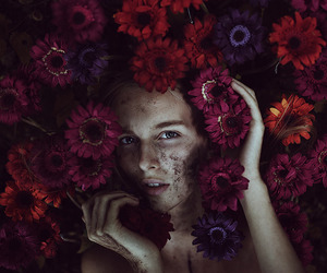 flowers, photography, and beauty image