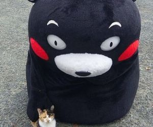 cat and kumamon image