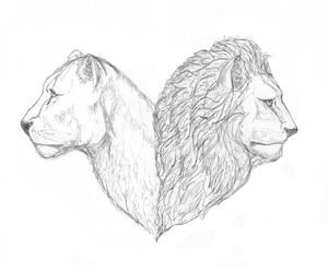 big cats, cat, and drawing image