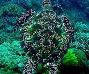 nature, sea, and turtle image