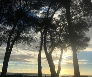 beach, sunset, and trees image