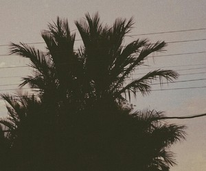 palmtree, view, and coconuttree image