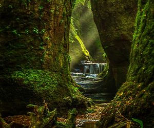 green, nature, and scotland image