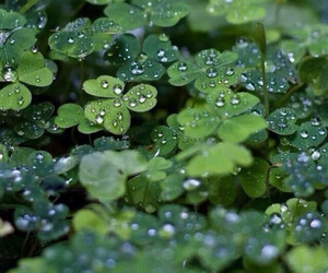 clover, green, and nature image