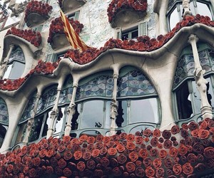 Barcelona, beautiful, and flowers image