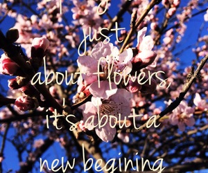 cherry tree, flowers, and quotes image