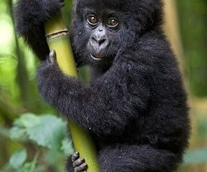 baby, jungle, and rainforest image