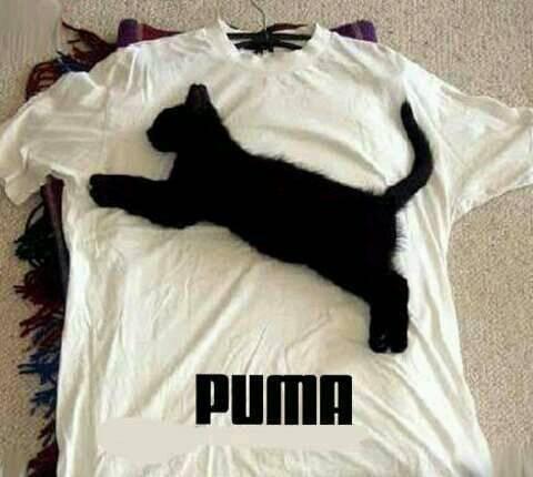 puma, cat, and funny image