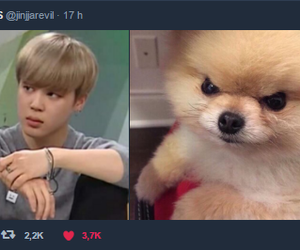 funny, bts, and chim chim image