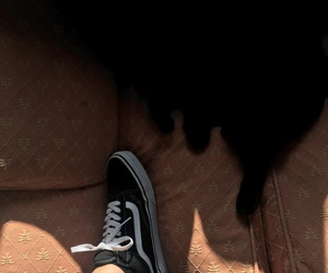 cat, mom jeans, and vans image