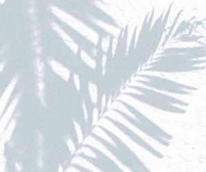 amazing, minimal, and monochrome image