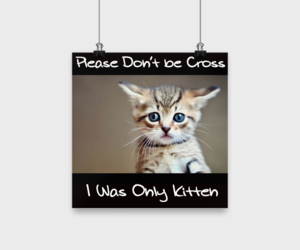 gift, kitten, and funnycat image