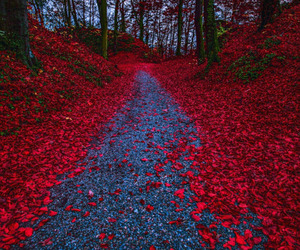 photography, beautiful, and red image