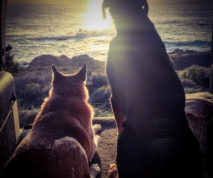 beach, dogs, and indie image