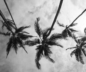 black and white, palms, and palm trees image