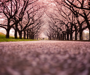 beautiful, pink, and tree image