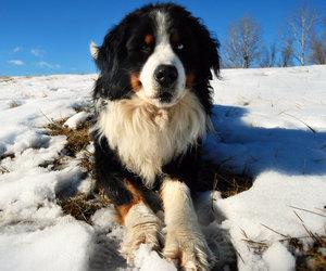 animal, february, and dog image