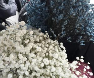 flowers blue white image