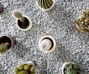 cactus and stones image