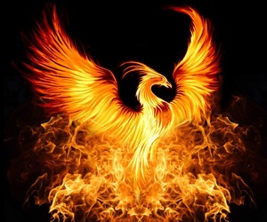 bird, phoenix, and fire image