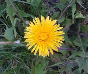 flower, garden, and grass image