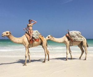beach, camel, and cool image