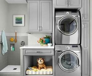 dog, laundry, and design interior image