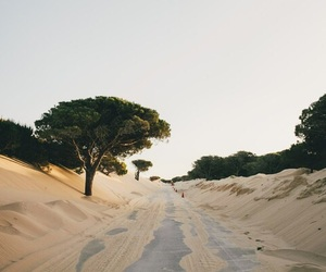 nature, sand, and tree image