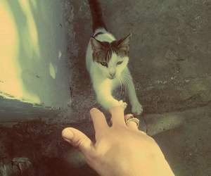 cat, playing, and fun image