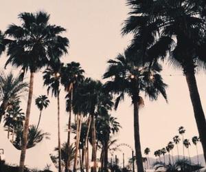 black, california, and coachella image