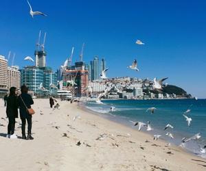 beach busan image