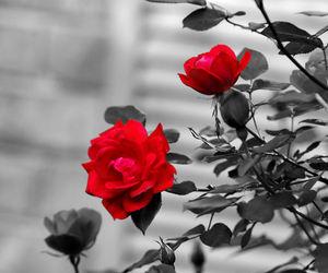 colorsplash image