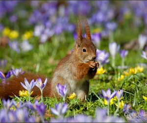 flower, spring, and squirrel image