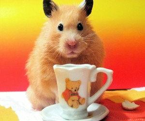 hamster, animal, and golden image