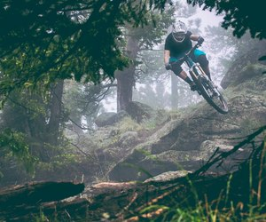 bike, forest, and mtb image