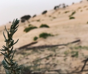 background, desert, and life image