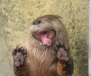 otter, animal, and funny image