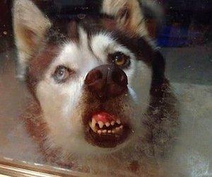 animal, glass, and funny image