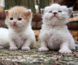 so cute image