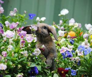 flowers, cute, and bunny image