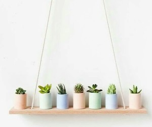 aesthetic, plants, and cactus image